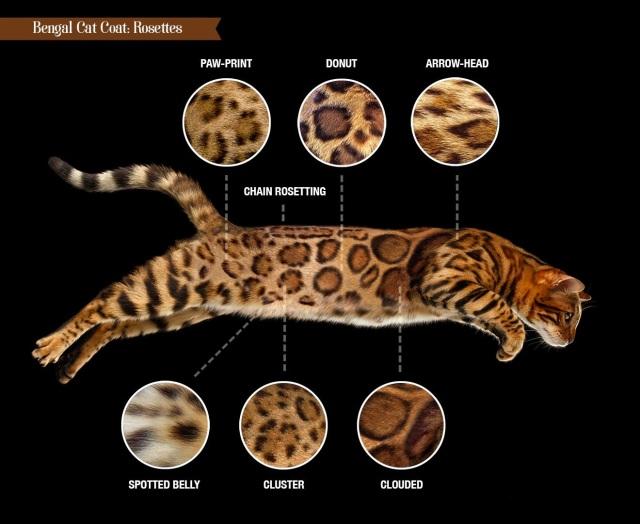 猫 の 種類 一覧